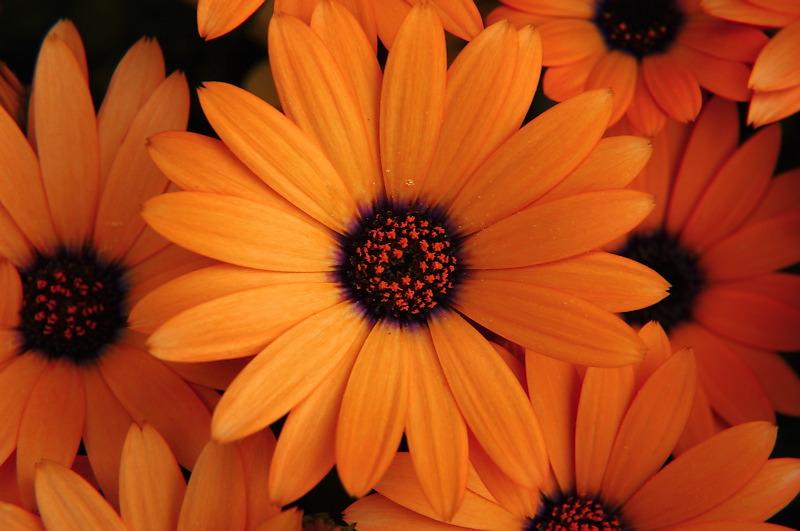 ألوان الطبيعة في الطبيعة الرقيقة 20061022185404_orang