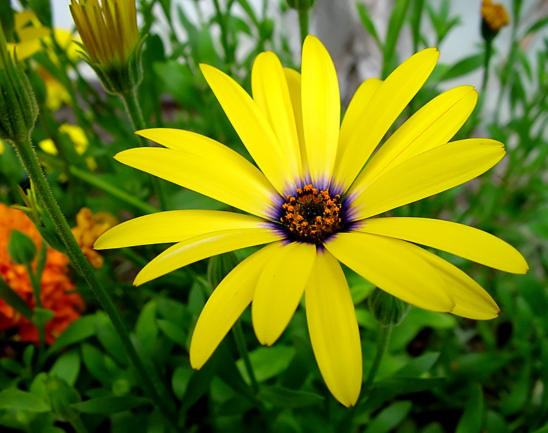 http://nolf.at/blog/images/20061212080832_yellow%20flower.jpg