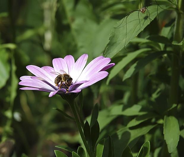 Bee vs. Spider || Biene gegen Spinne